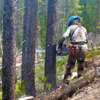 excessive forest thinning